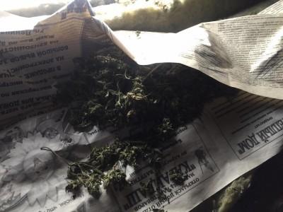 Полицейские Мордовии выявили незаконно хранящуюся марихуану